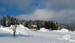 1329065_winter_landscape.jpg