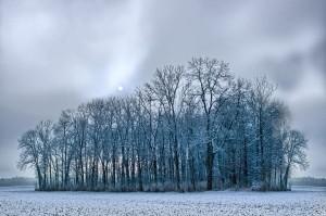 1408255_trees_in_foggy_winter_landscape