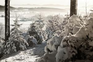 1409804_snowy_forest.jpg