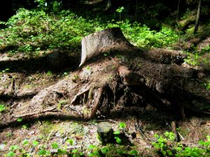 stump-1538702