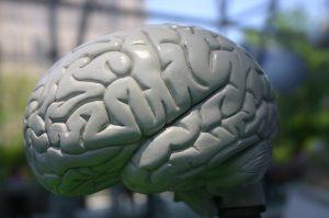 brains-1426619