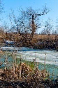 Car Drives into Swamp in Brockton