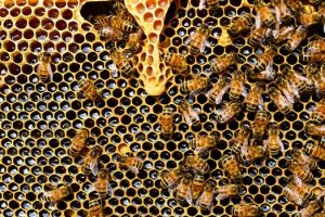 Two-Vehicle Crash Caused when Driver Stung by Bees